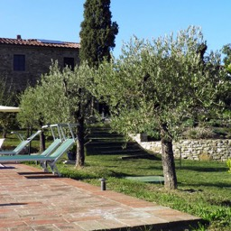 Borghetto Calcinaia: Ancient olive trees around the pool
