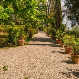 Villa Paradiso: Lemon trees amongst the magnificent grounds of the rental villa, Sansepolcro, Tuscany