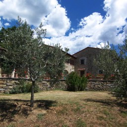 Villa Sergia: Ancient olive groves are just one of the wonderful features of this property
